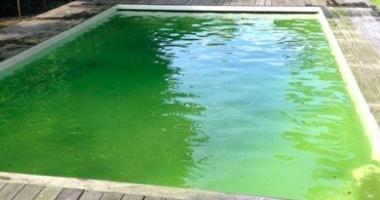 piscine algue verte