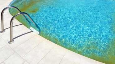 piscine avec algue moutarde