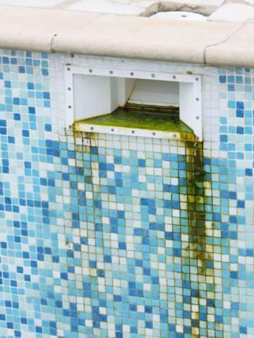 Algues vertes skimmer