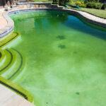 Les algues vertes de piscine