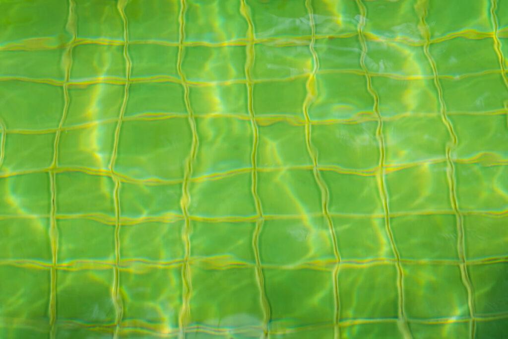 alga verde piscina