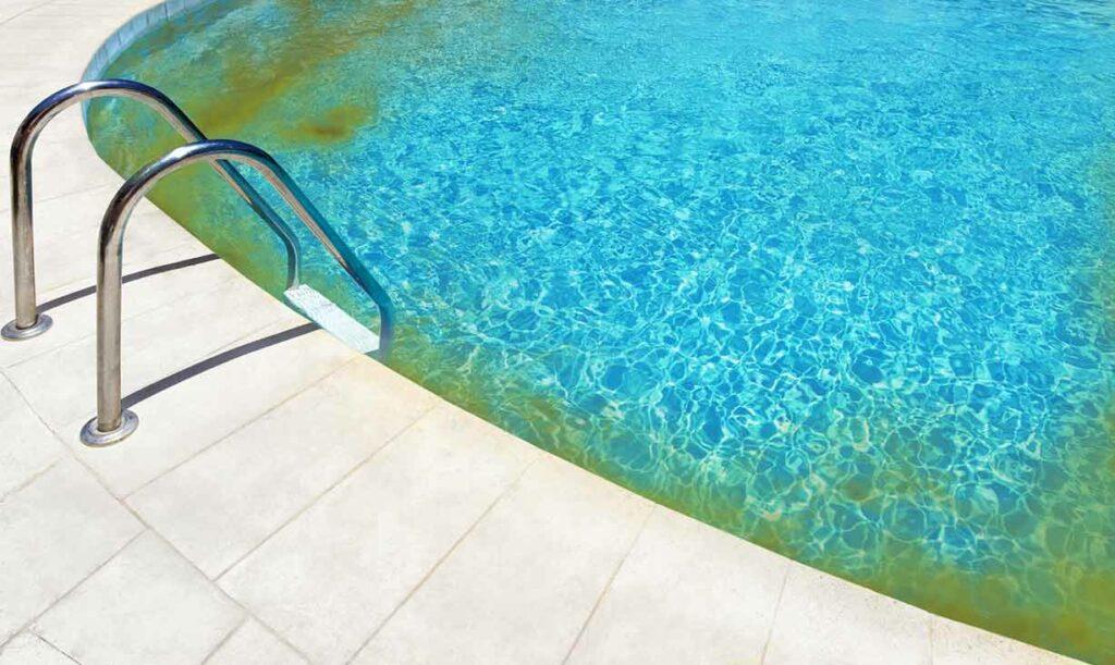 algues moutarde dans une piscine